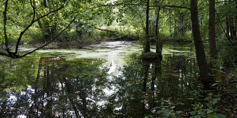 Erdfall mit Wasser gefüllt, Foto: Elke Blanke
