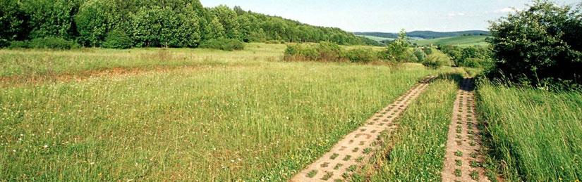 Grünes band Sachsen-Anhalt, Foto: Nationalpark Harz