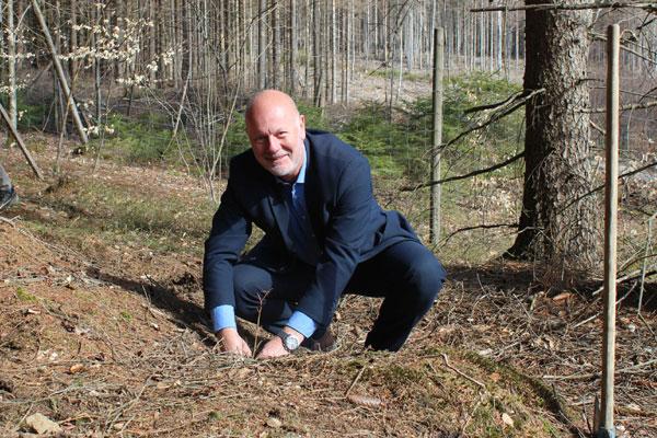 Steffen Meinecke, Geschäftsführer der Stadtwerke Wernigerode, setzt ein junges Zukunftsbäumchen in den Boden des Nationalparks Harz