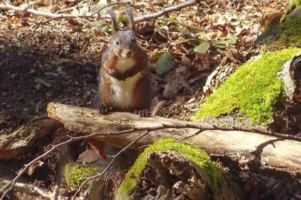 Eichhörnchen, Foto: Sabine Bauling