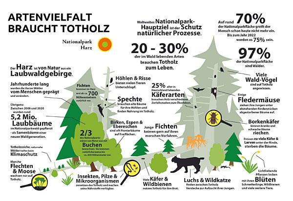 Grafik-Totholz-Waldwildnis, Gebara