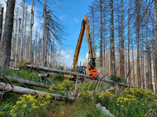 Sicherungsarbeiten am Forstmeister Sietz-Weg, Foto NpH